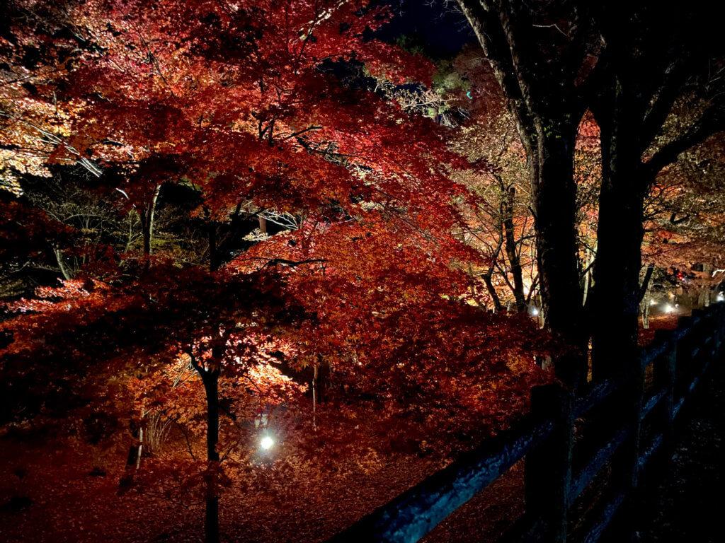山中湖紅葉まつり、その1