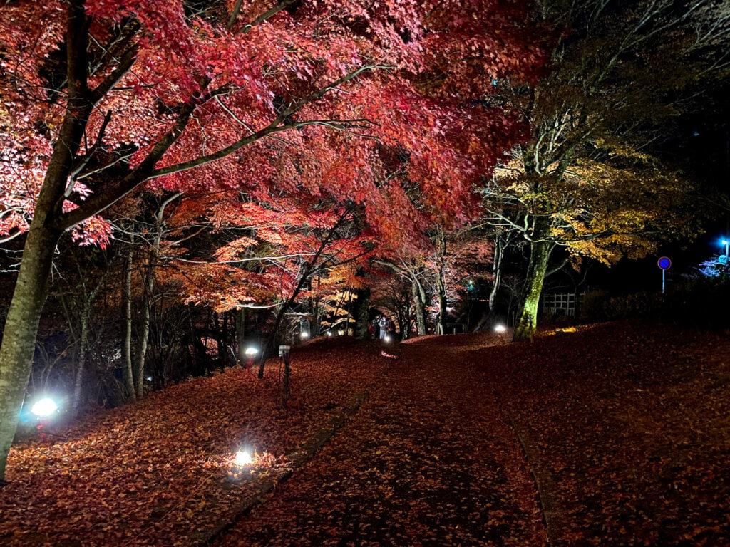 山中湖紅葉まつり、その2