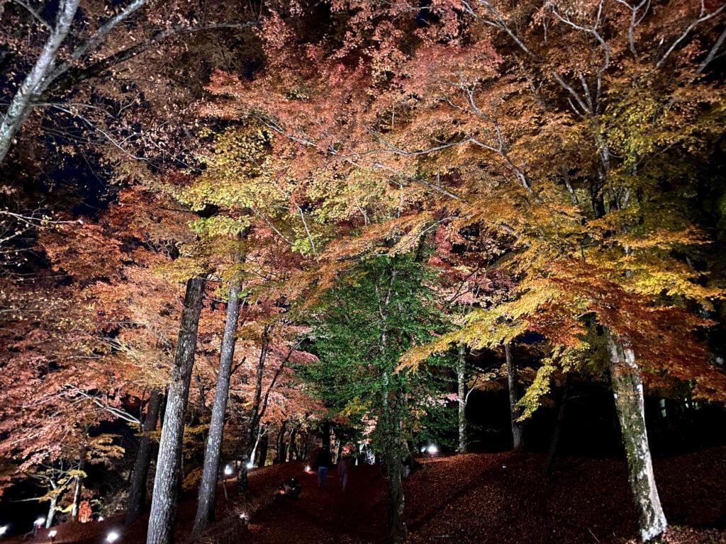 山中湖紅葉まつり、その3