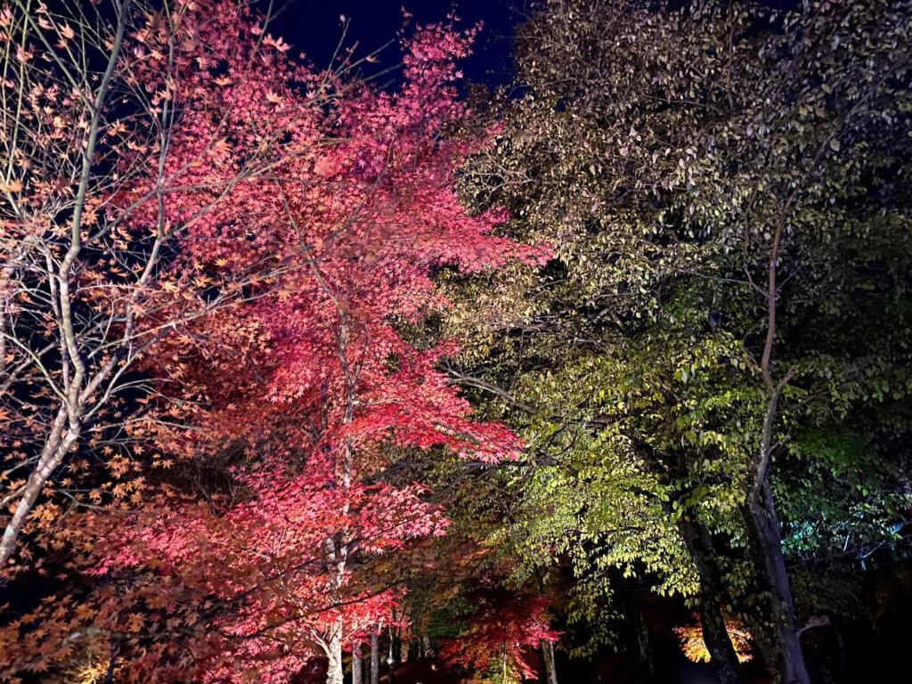 山中湖紅葉まつり、その4